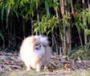 Elevage : <b>Of Victoria's Garden</b> <span class='click'><a href='/eleveur,fiche,1577,118620.html'>Ouvrir la fiche de l'&eacute;leveur</a></span>