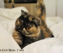Elevage : <b>Chester Cat's</b> <span class='click'><a href='/eleveur,fiche,140,145494.html'>Ouvrir la fiche de l'&eacute;leveur</a></span>