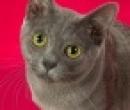 Elevage : <b>Passaya</b> <span class='click'><a href='/eleveur,fiche,142,146293.html'>Ouvrir la fiche de l'&eacute;leveur</a></span>
