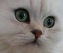 Elevage : <b>Mcb</b> <span class='click'><a href='/eleveur,fiche,132,147360.html'>Ouvrir la fiche de l'&eacute;leveur</a></span>