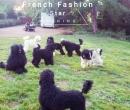 Elevage : <b>French Fashion Star</b> <span class='click'><a href='/eleveur,fiche,1591,150205.html'>Ouvrir la fiche de l'éleveur</a></span>