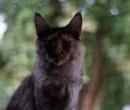 Elevage : <b>Chaman'jazz'cat</b> <span class='click'><a href='/eleveur,fiche,143,149024.html'>Ouvrir la fiche de l'éleveur</a></span>