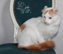 Elevage : <b>Djoko Cat's</b> <span class='click'><a href='/eleveur,fiche,124,150812.html'>Ouvrir la fiche de l'éleveur</a></span>