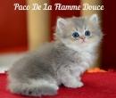 Elevage : <b>De La Flamme Douce</b> <span class='click'><a href='/eleveur,fiche,133,124446.html'>Ouvrir la fiche de l'éleveur</a></span>