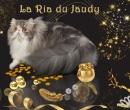 Elevage : <b>De La Ria Du Jaudy</b> <span class='click'><a href='/eleveur,fiche,149,148627.html'>Ouvrir la fiche de l'éleveur</a></span>