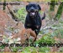 Elevage : <b>Des Cheuns Du Saintonge</b> <span class='click'><a href='/eleveur,fiche,365,155005.html'>Ouvrir la fiche de l'éleveur</a></span>