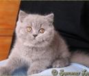 Elevage : <b>Summer Love</b> <span class='click'><a href='/eleveur,fiche,133,144618.html'>Ouvrir la fiche de l'éleveur</a></span>