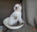 Elevage : <b>Cat's Cradle</b> <span class='click'><a href='/eleveur,fiche,133,148415.html'>Ouvrir la fiche de l'éleveur</a></span>