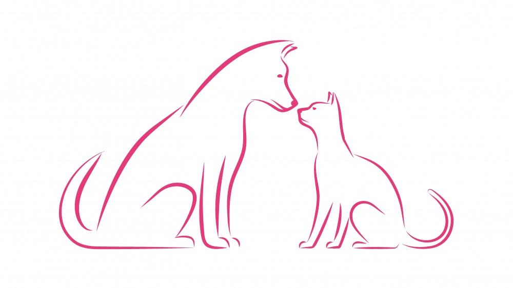 Petit chien courant suisse - petit courant bernois poil lisse