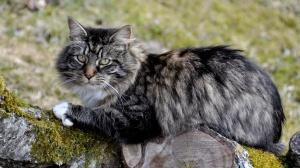 Recherons chat retraité
