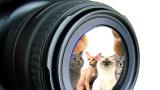 Photos de chats de race