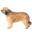 Chien de berger catalan poil long