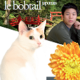 Japanese bobtail poil long