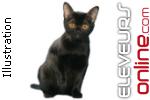 Élevage The Cat's Aaron
