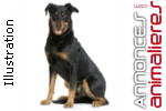 Adultes beauceron
