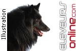 Élevage Du Mas Des Amour De Loups